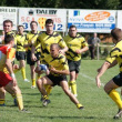 Avenir Excideuil Rugby - Attention, les abeilles piquent.